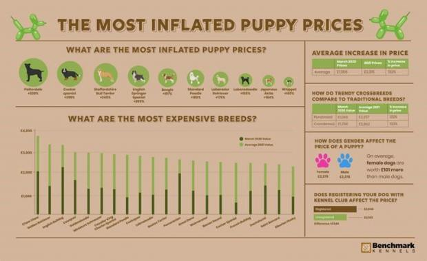 Ledbury Reporter: The most inflated puppy prices. (Benchmark Kennels)
