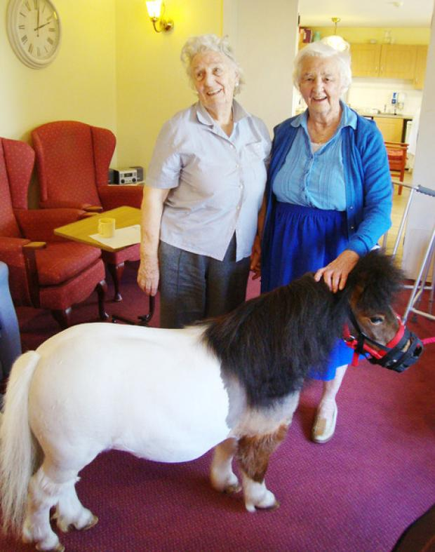 Hastings Care Home residents Anne Cartwright (left) and Ann Thompson (right) with Tickle the pony from the Phoenix Children's Foundation.