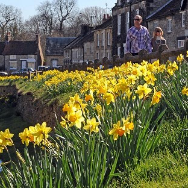 Daffodils on display in Helmsley, North Yorkshire, as the fine spring weather continues