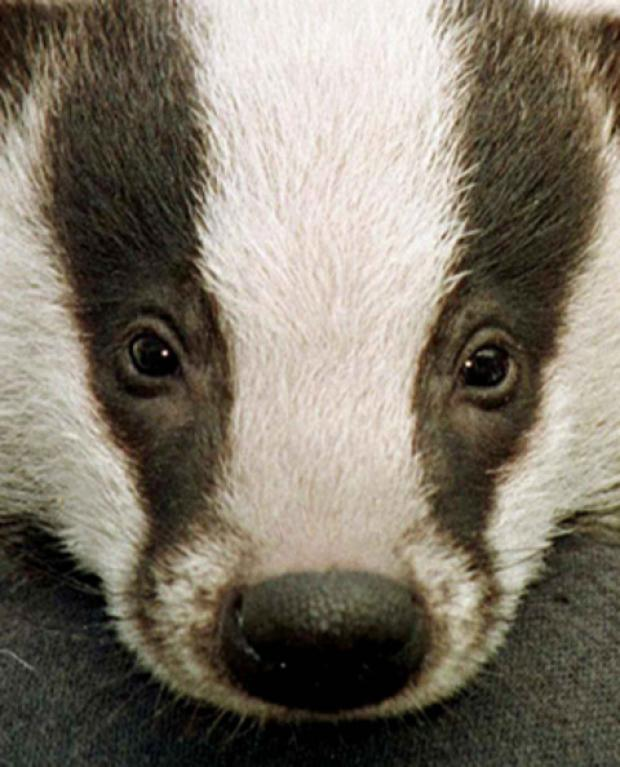 CULL TRIAL: Campaigners are saddened
