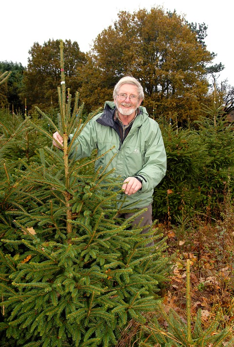 FINE FIRS: Coddington Christmas Tree Farm owner Colin Palmer says trade is good as an airborne fungus targets Nordmann firs. Picture: Nick Toogood 4712181901
