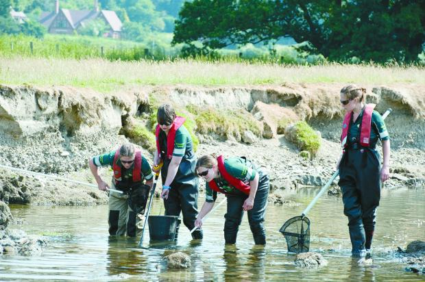 Ledbury Reporter: Fish are rescued from low waters in the Teme.