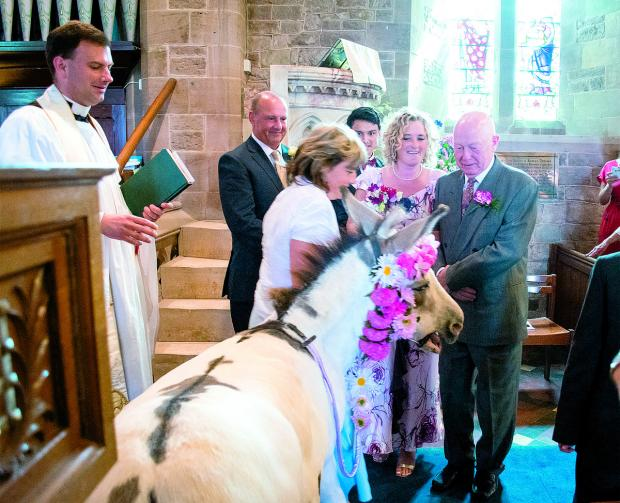 Moses the donkey respectfully observes the wedding of Charlotte and Matthew Sullivan. Picture courtesy Catherine Farmer.