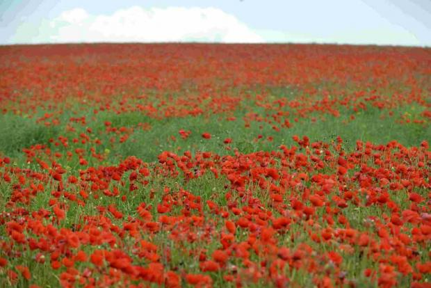 REMEMBERANCE: This year marks 100 years since the First World War began.