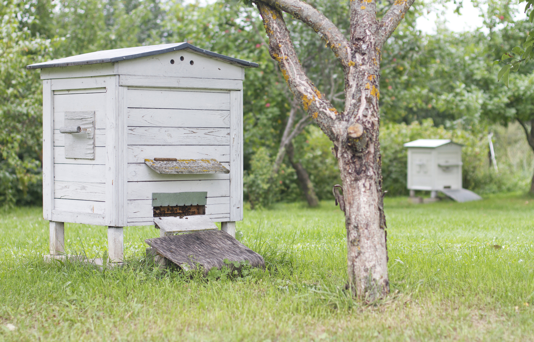 Six beehives were stolen from an orchard.