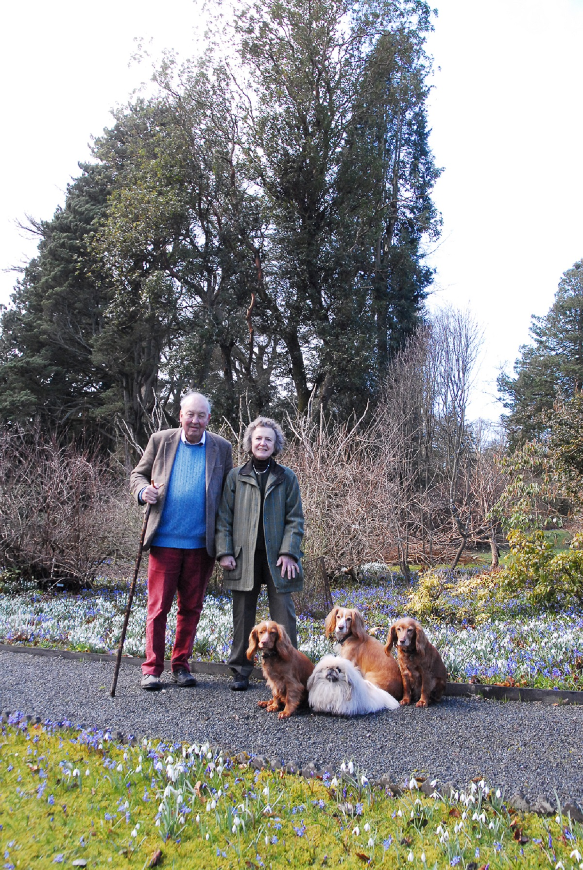 Lawrence and Elizabeth Banks near one of the 85 Champion trees at Hergest Croft Gardens in Kington with dogs Hanter, Hera, Honey and Tallulah. The tree is called Madrona (Arbutus Menziessi). Photo by Eye Contact Media.