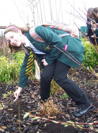 Year seven student Megan Mitchell planting poppy seeds.