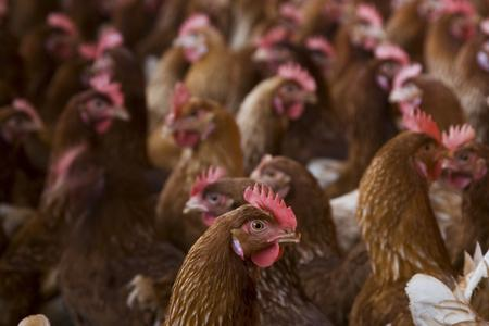 An application for a six broiler units at Bush Bank was passed this week.