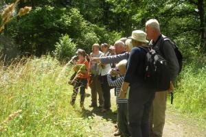 Rare butterflies spotted during Haugh Woods walk