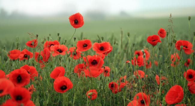 Poppy collection in Ledbury raises over £12,000 | Ledbury Reporter