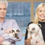 Ledbury Reporter: Holly Willoughby took her adorable cats on This Morning and the response was purr-fect