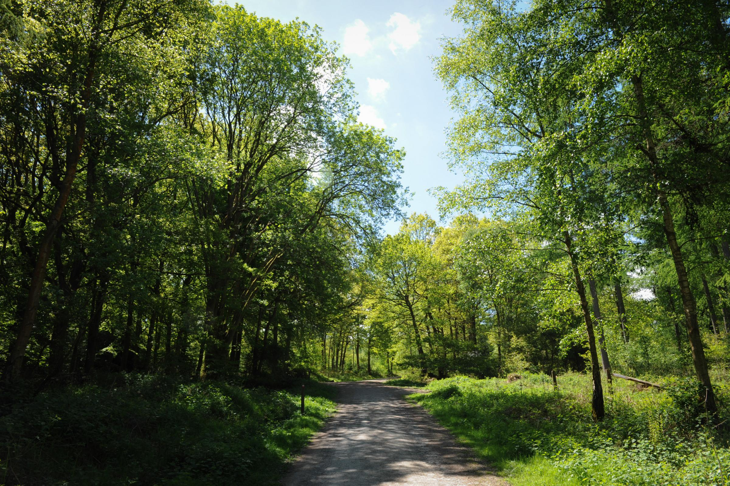 There are fears for the future of Mortimer Forest. Photo: James Maggs