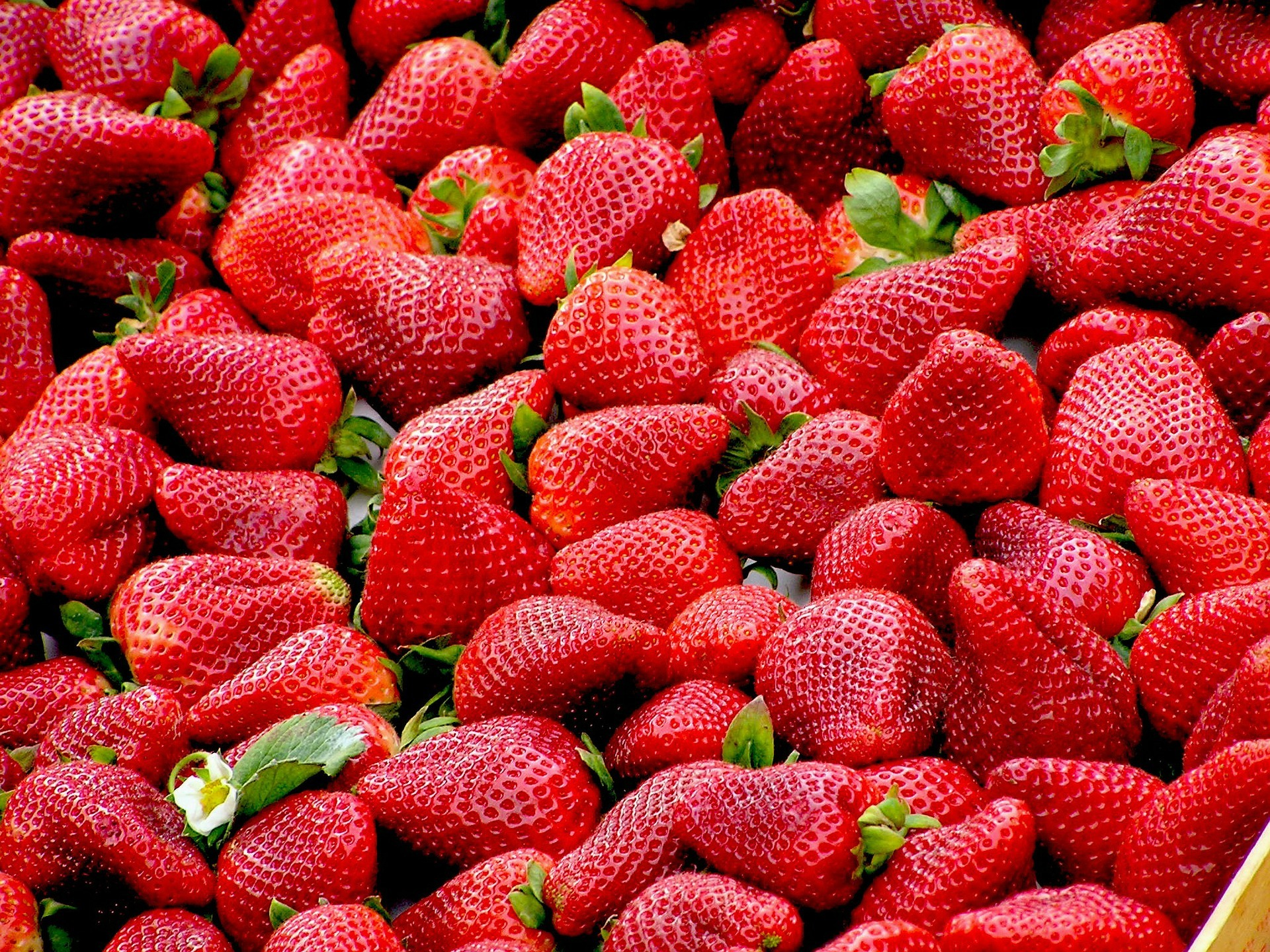 Strawberries. File photo
