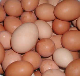 Ledbury Reporter: Shopkeepers ban youngsters from buying eggs