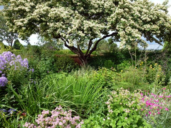 GARDEN: Court House and High Beam will be opening to the public for the national garden scheme